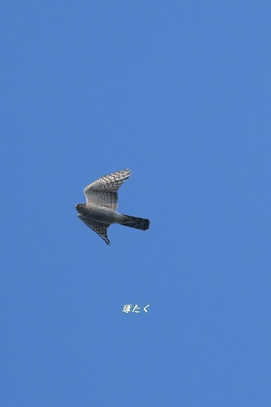 1a-ADSCF1036.jpg